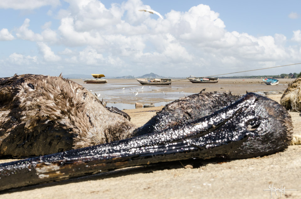 Image Caption: A scene from Otaheite Bay, Trinidad after the South Trinidad oil spill of December 2013. The livelihoods of fishermen and animals alike were adversely affected. January 4th, 2014.—Click to read this article.