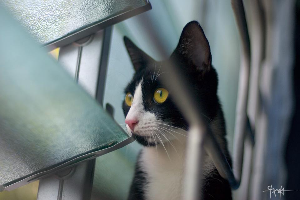 Photon Cat