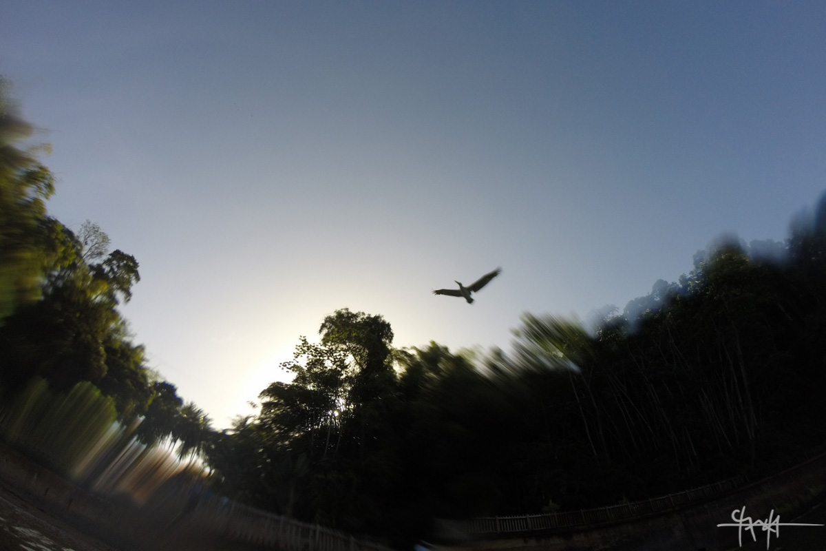 Image Caption: A pelican flies above Macqueripe Bay, Trinidad. 19th December, 2015. (Shaun Rambaran / Forge Business Imagery)—Click to read this article.