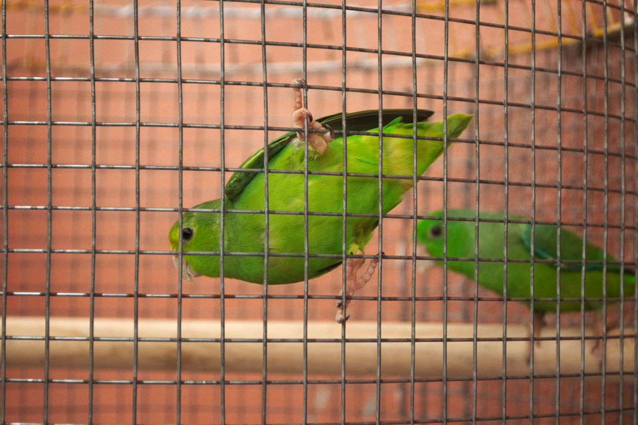 Image Caption: A pair of green parakeets. 30th August, 2017.—Click to read this article.
